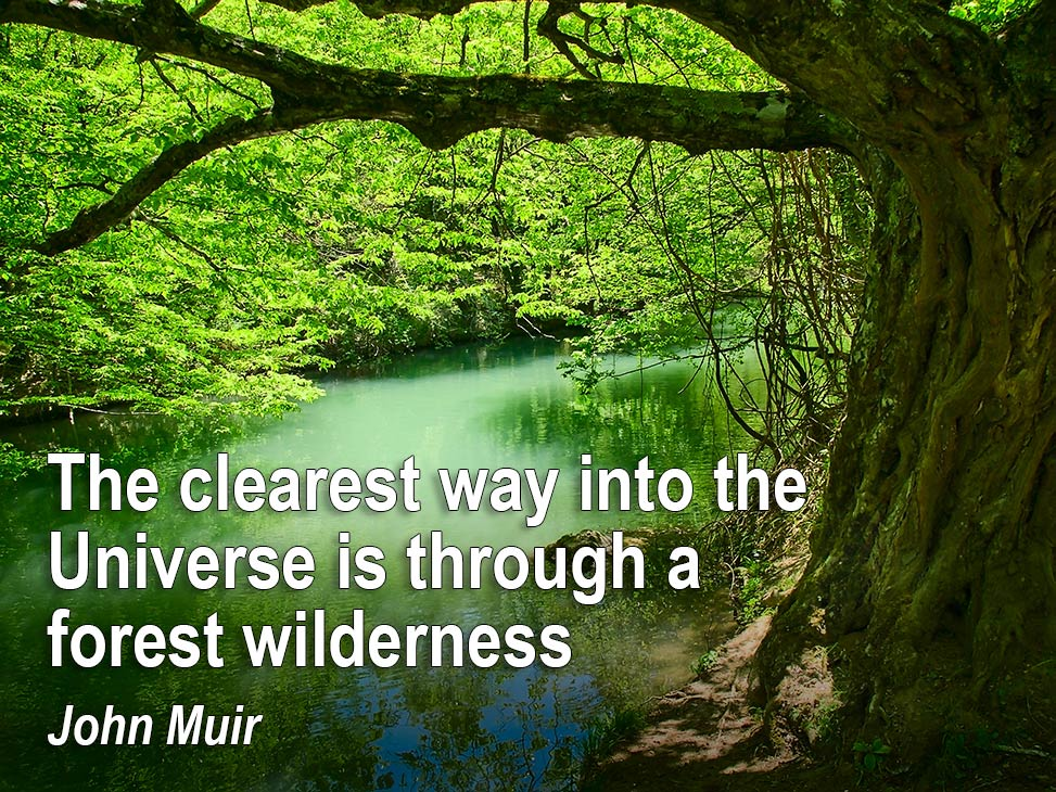 The clearest way into the Universe is through a forest wilderness - John Muir
