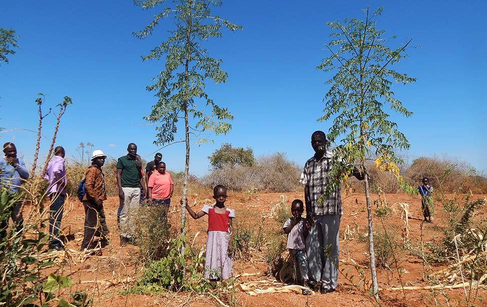 Showing new contract farmers young mukau trees