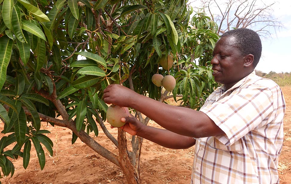 Samuel Mulli, a Better Globe Forestry outgrower