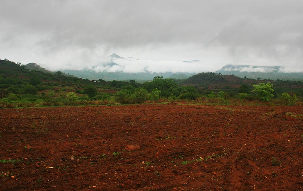 Green and lush soil during rainy season in Kenya