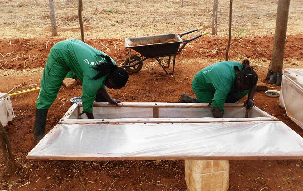 Better Globe Forestry workers planting seeds in the soil in a propagator box