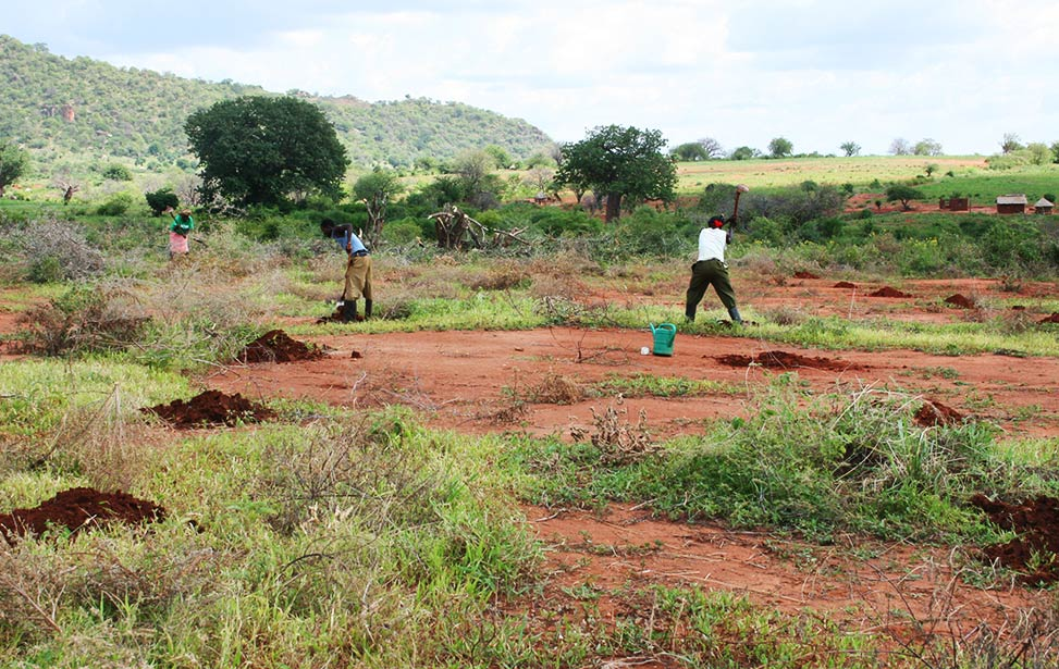 Better Globe Forestry workers preparing the soil for planting tree seedlings