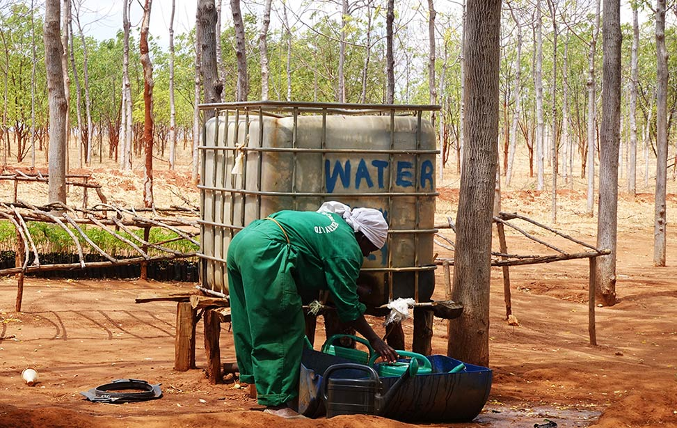Smaller water tank used for watering younger tree seedlings