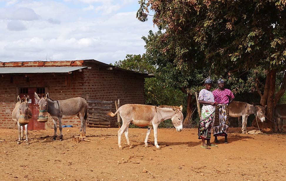 Farmers with their donkeys, Kenya