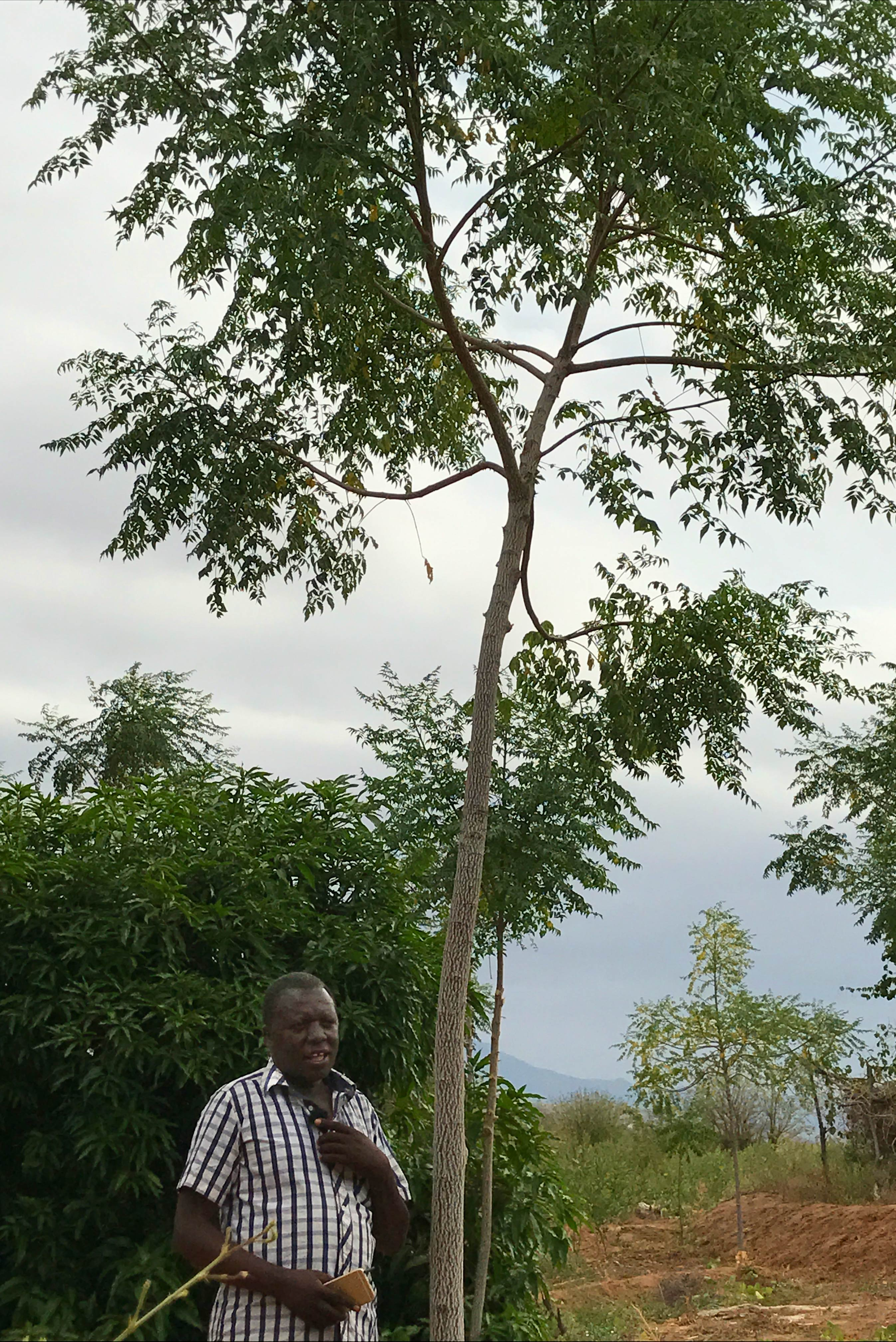 An outgrower and his mukau tree