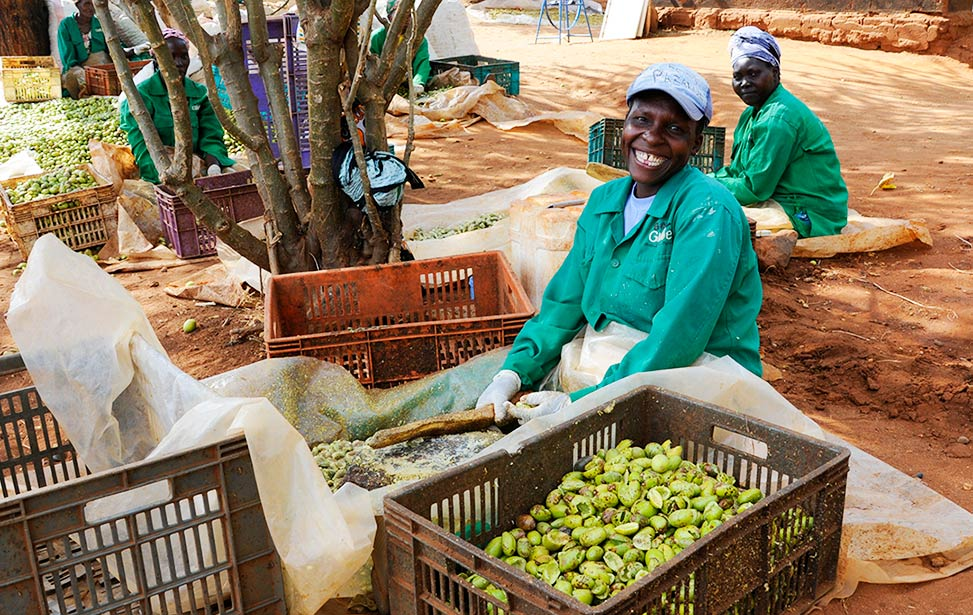 Women working at Better Globe Forestry's plantation