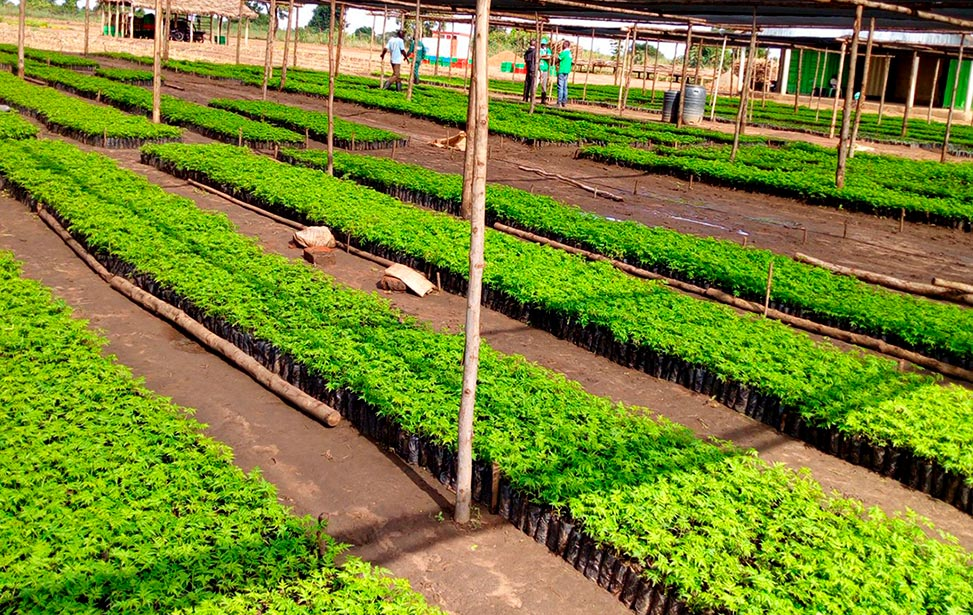 Better Globe Forestry nursery in Dokolo district of Uganda