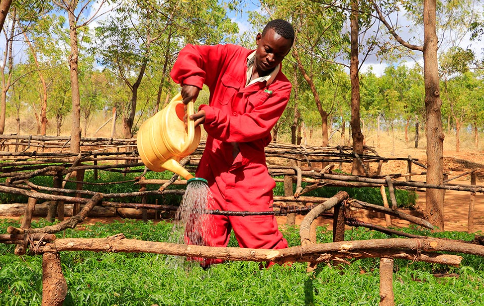 Watering tree seedlings at Kiambere Plantation