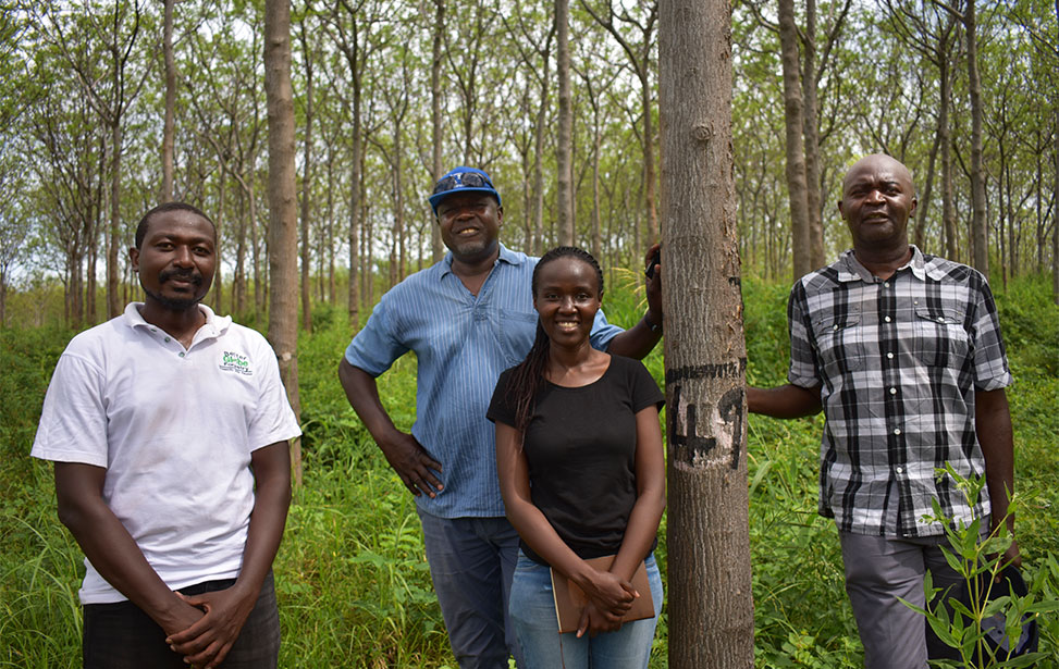 Kiambere plantation assessment