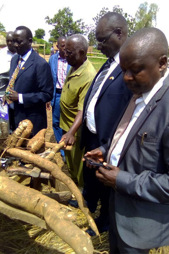 Cassava experts