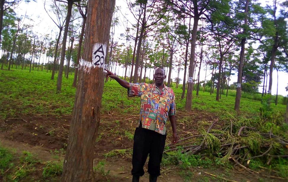 Marking trees