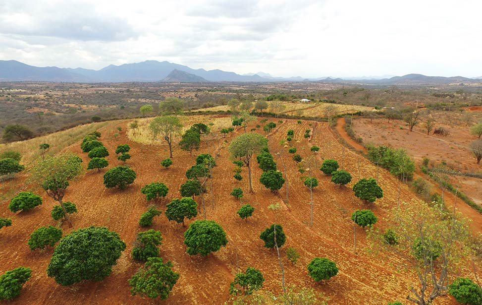 Agroforestry — a way for economic prosperity in Africa