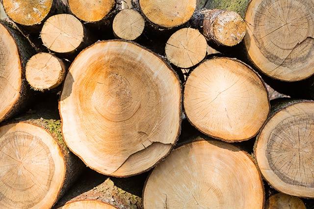 Logging ban in Kenya